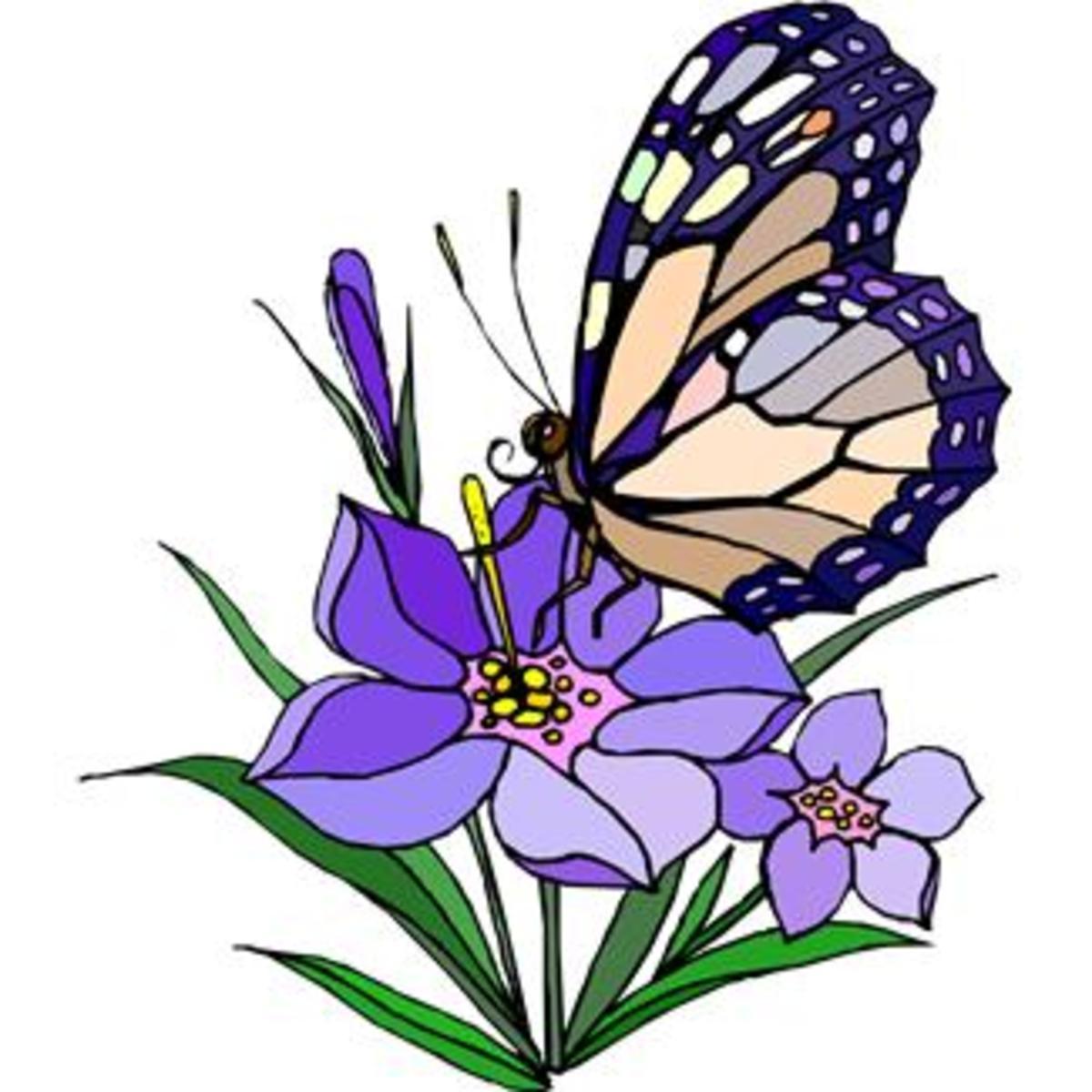 Purple Butterfly on Purple Flowers