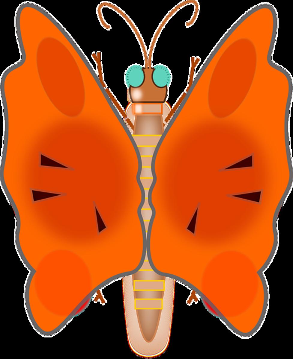 Big Wings on Orange Butterfly