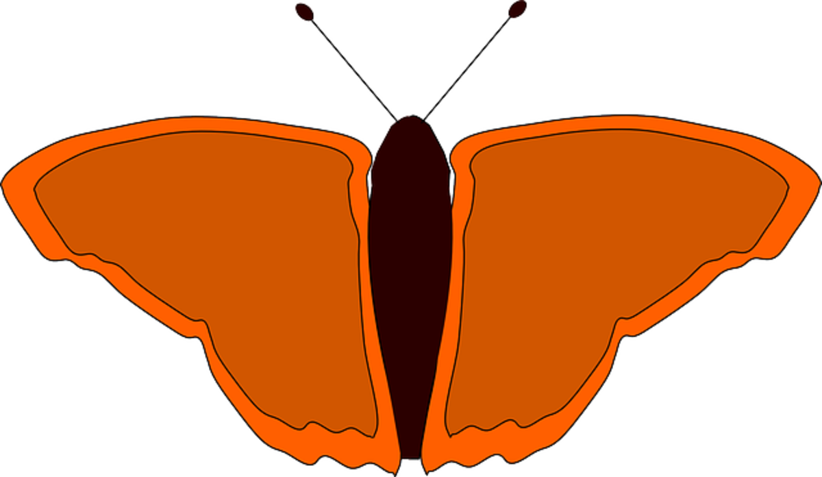Small Orange Butterfly
