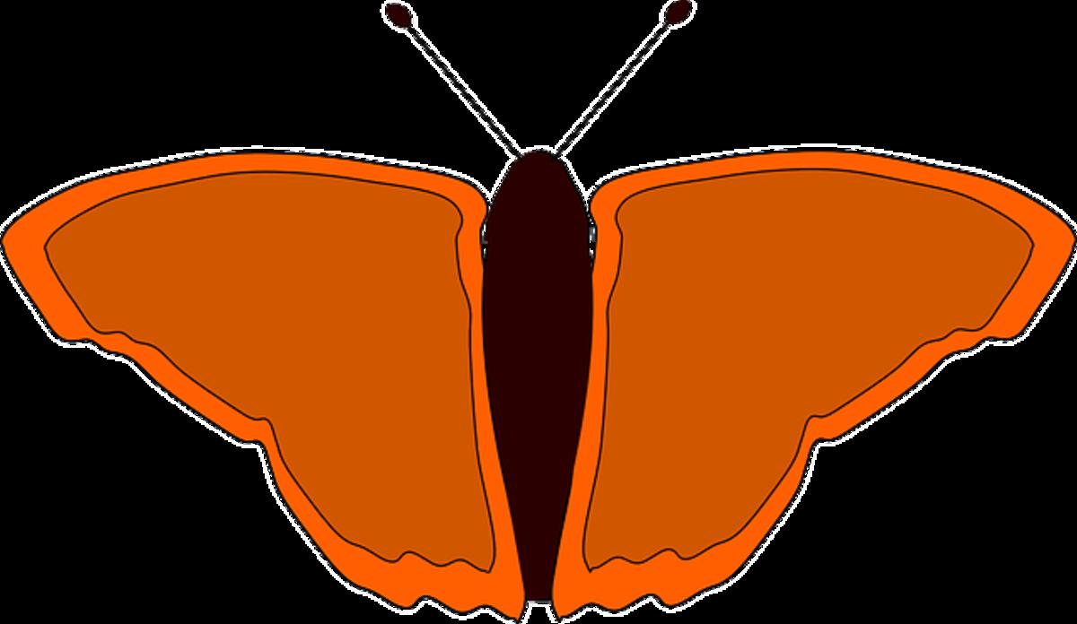 Small Orange Butterfly