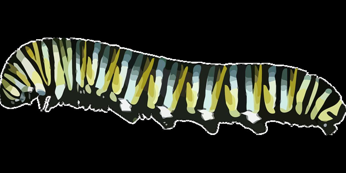 Green and Blue Caterpillar