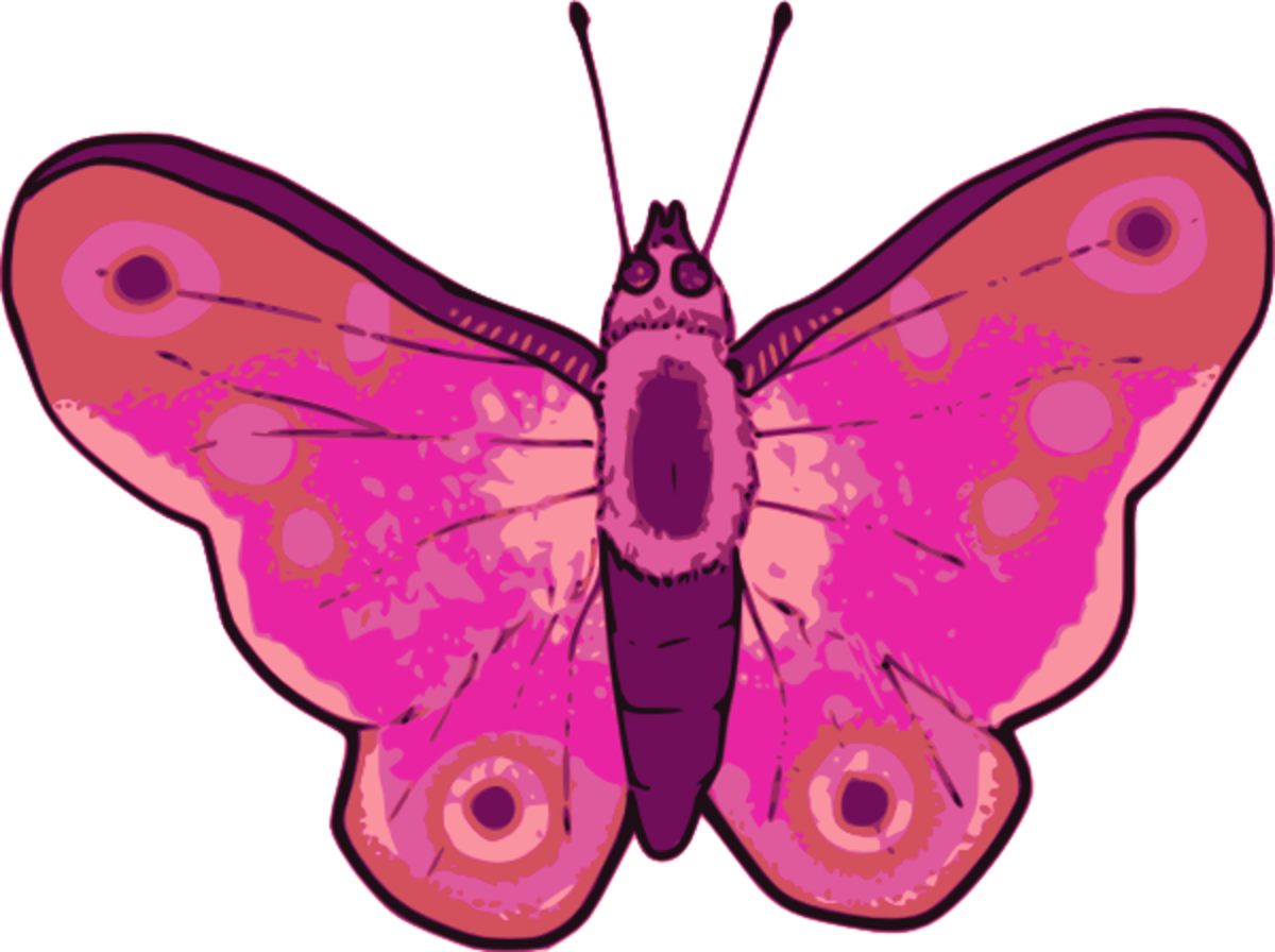 Pink Butterfly with Wings Spread