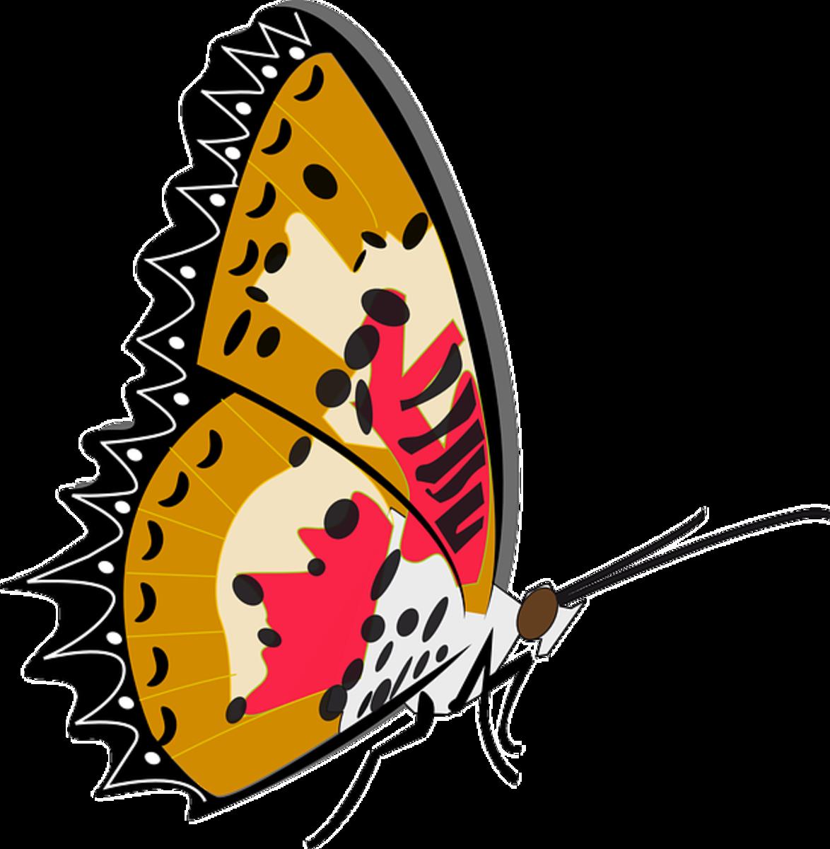 Clip Art of Sideways Butterfly