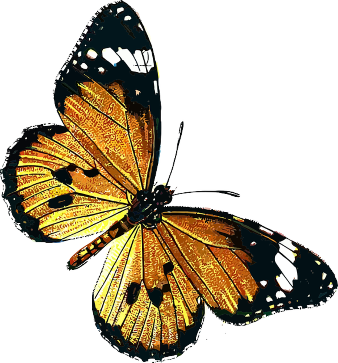 Yellow, Orange and Black Butterfly