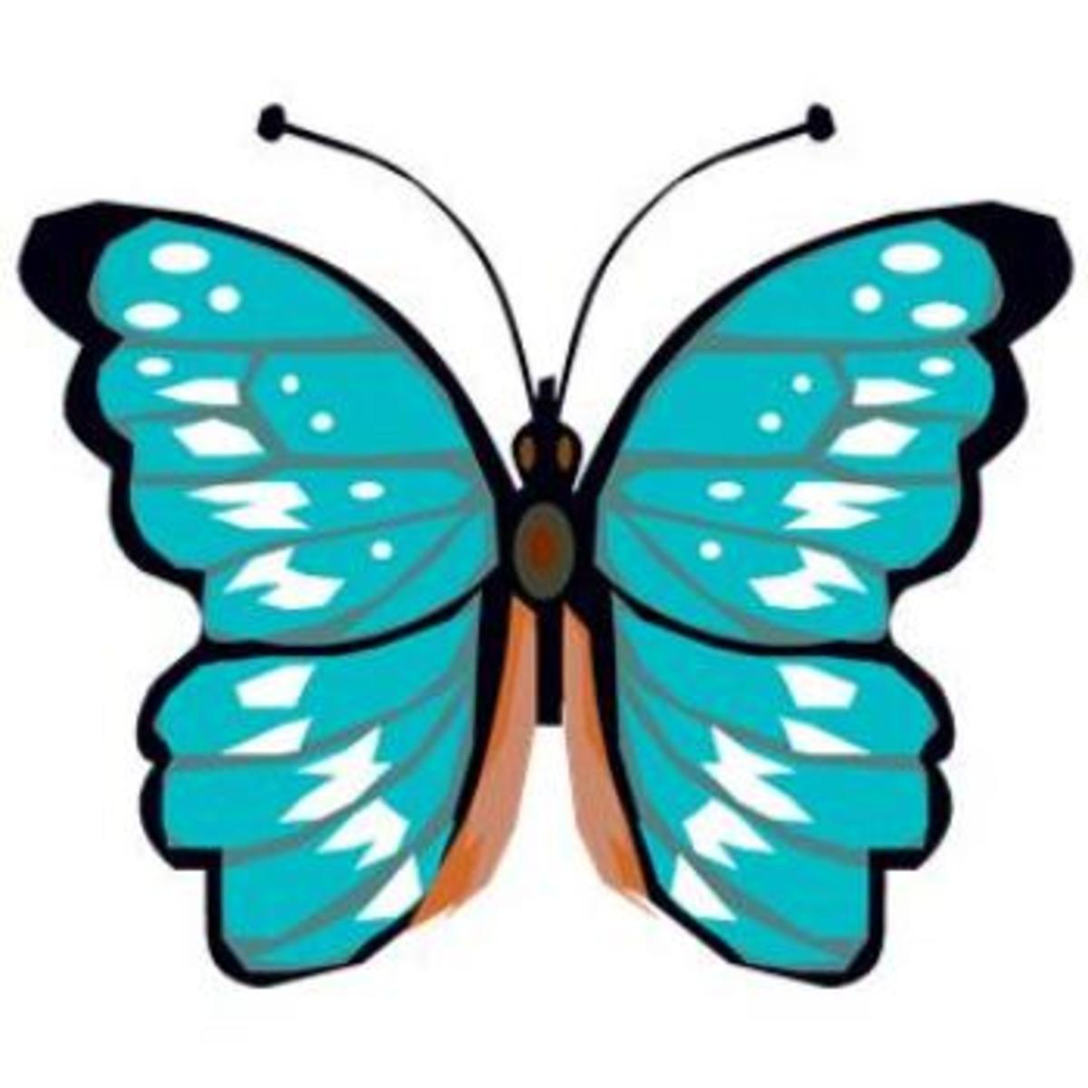 Turquoise and Orange Butterfly