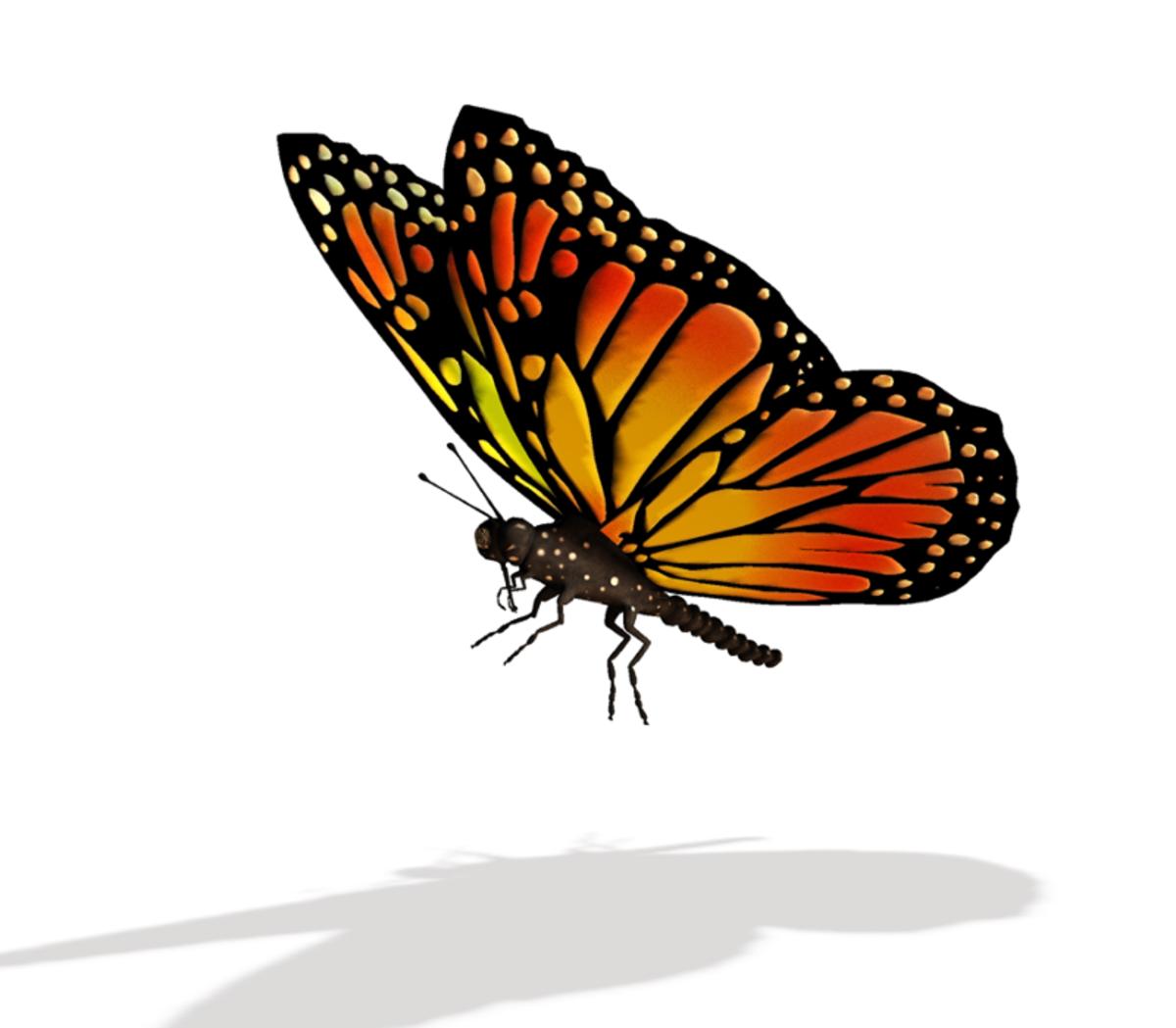 Flying Monarch Butterfly