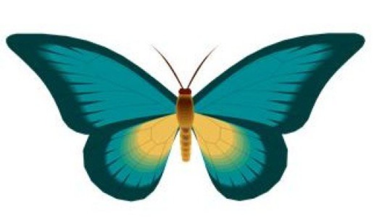 Teal Butterfly