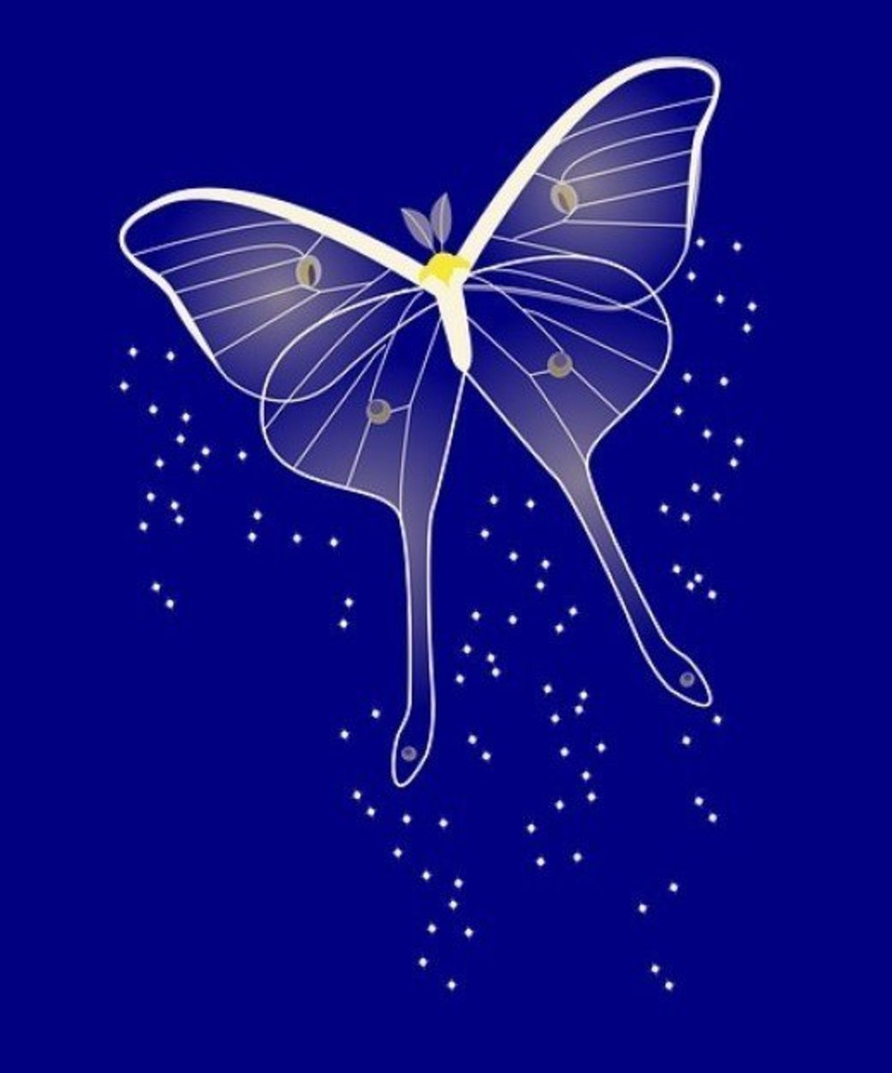 Blue Butterfly Dream
