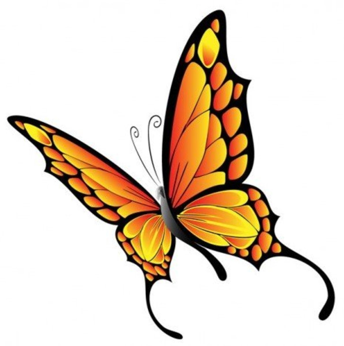 Graceful Orange Butterfly Graphic