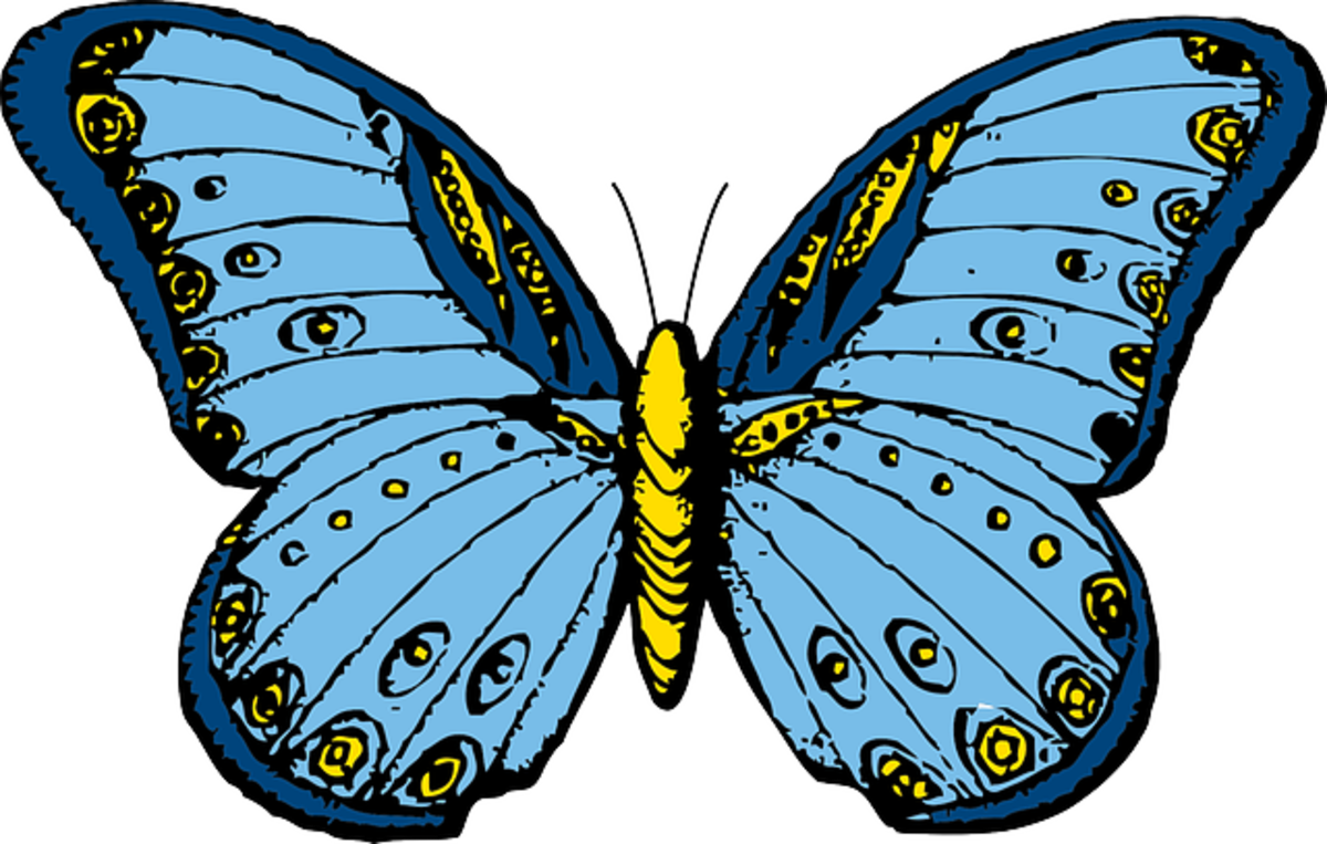 Turquoises Butterfly
