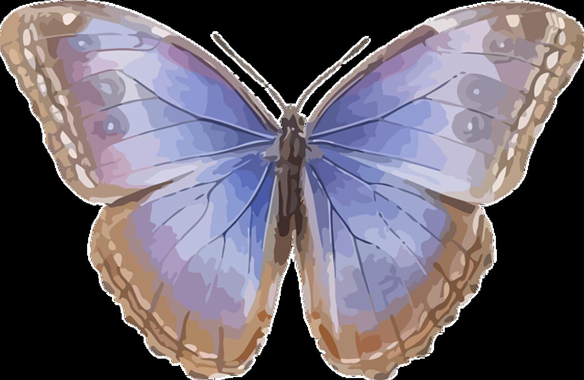 Powder Blue Butterfly