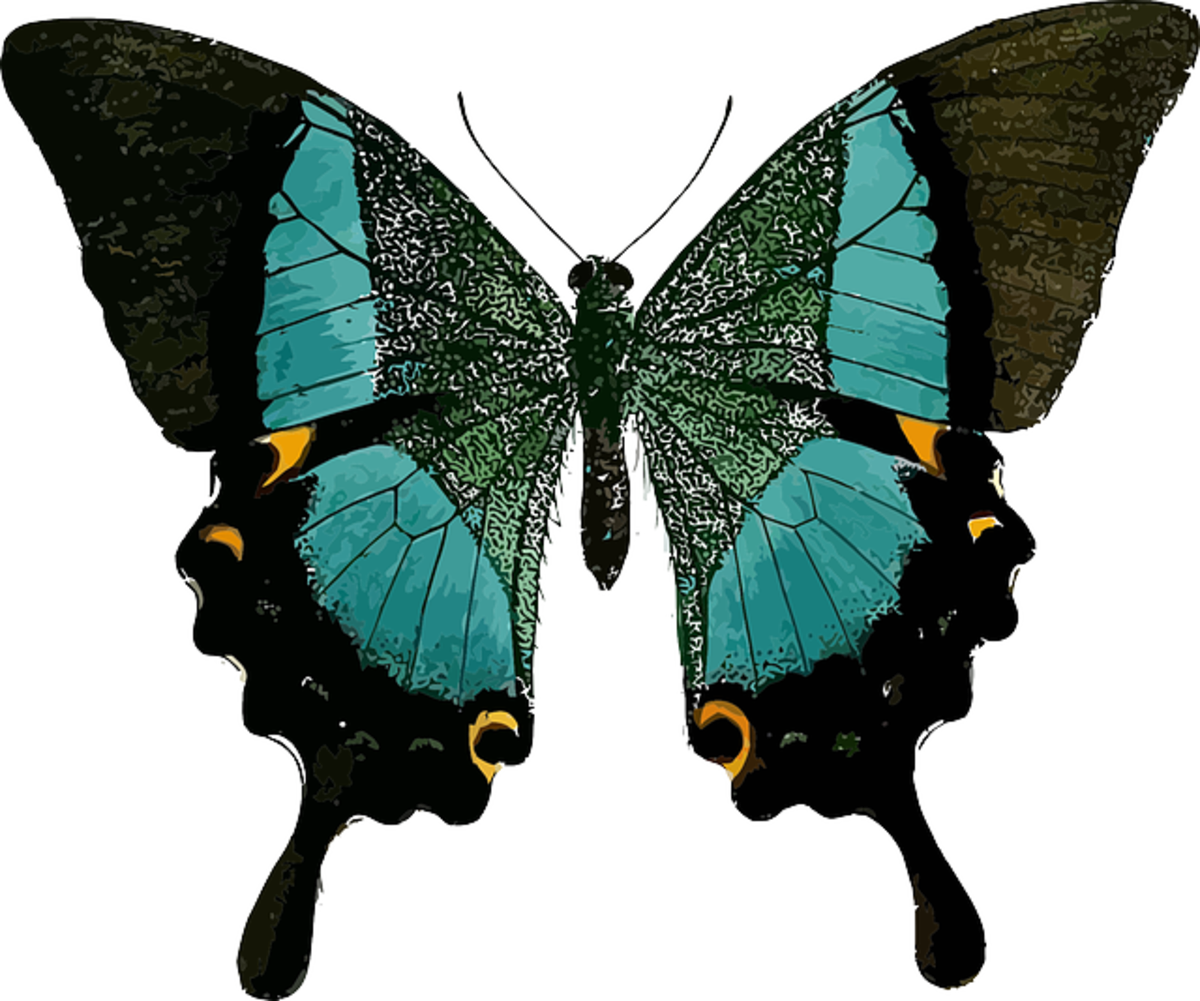 Green and Turquoise Swallowtail butterfly