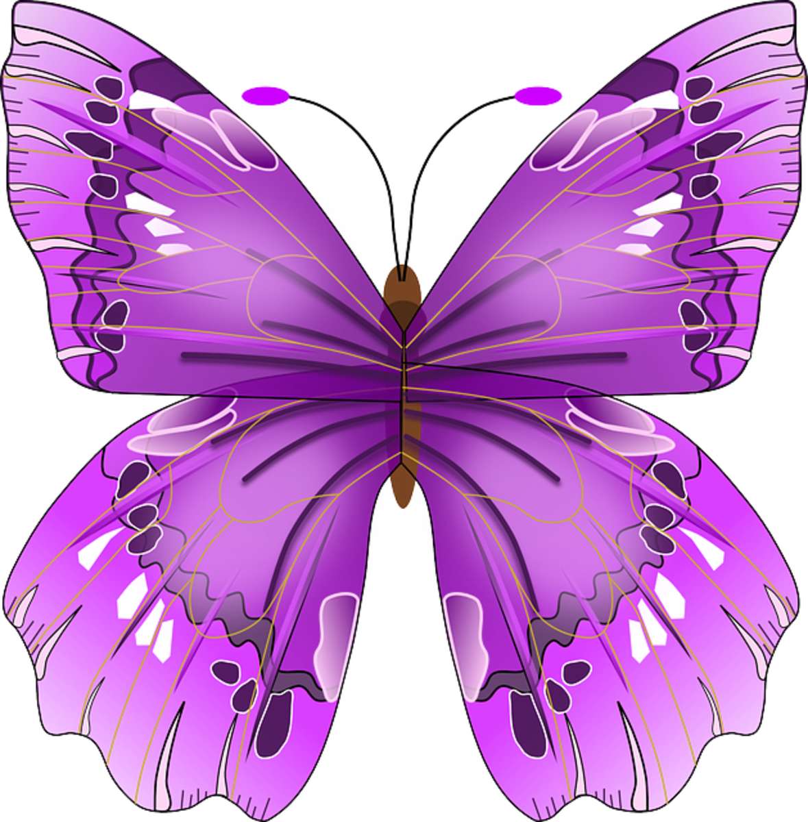 Big Purple Butterfly