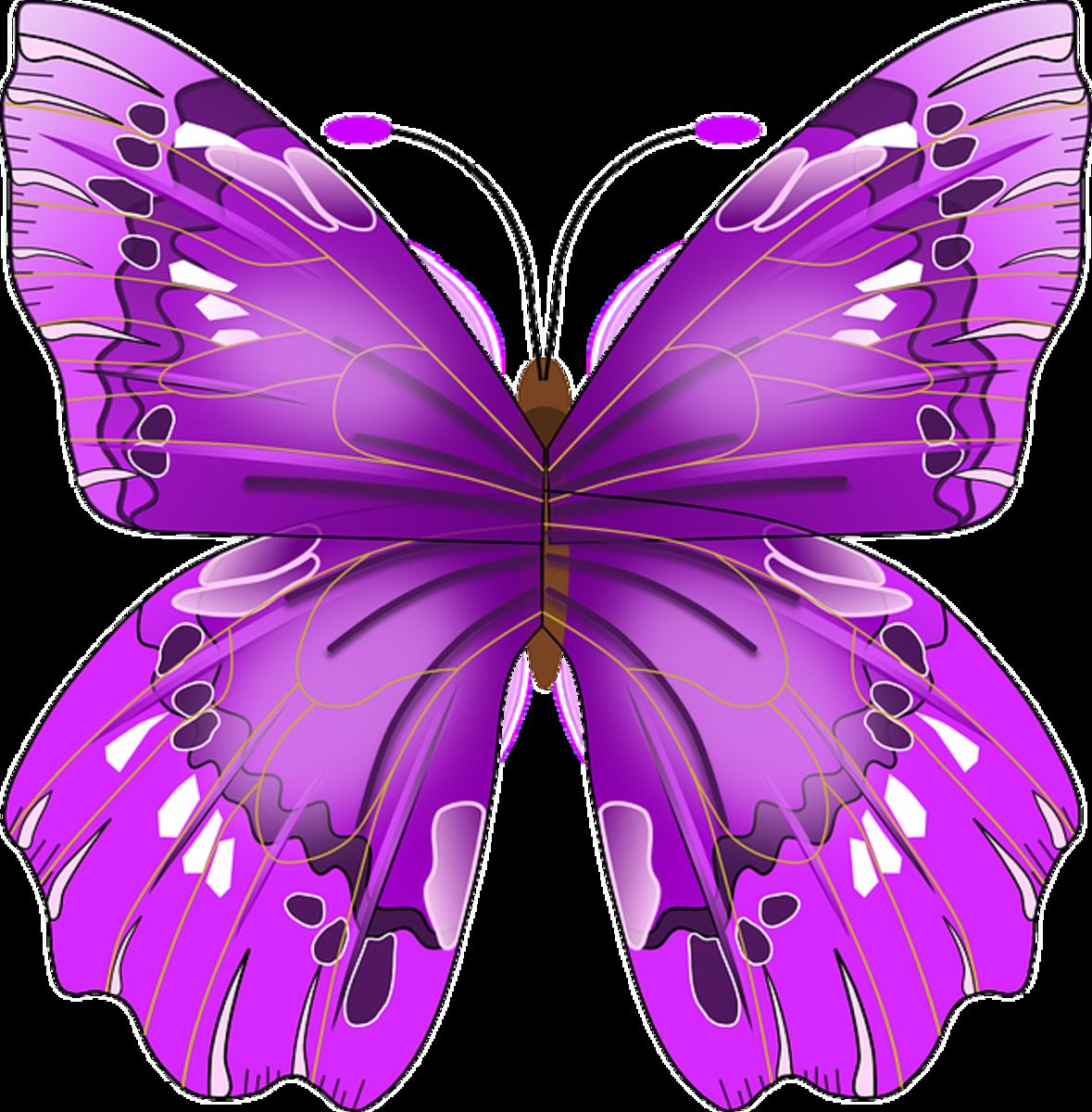 Big Purple Butterfly