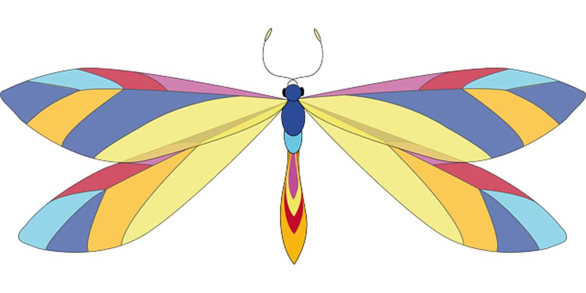 Butterfly with Multicolored Wings