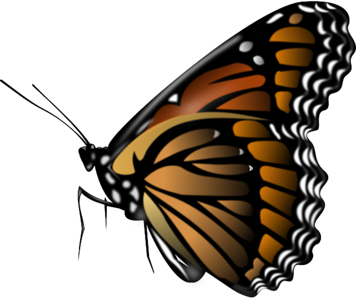 Orange, Brown and Black Butterfly