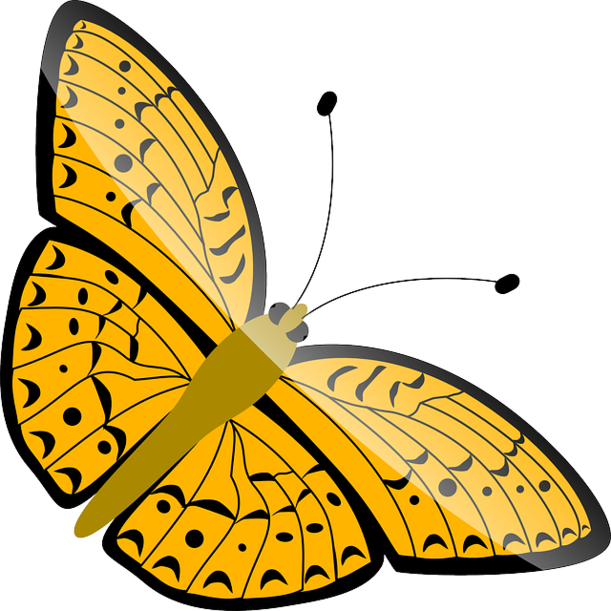 Gold and Orange Butterfly