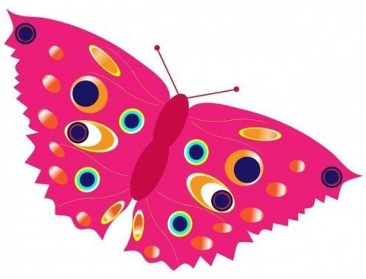 Pink Peacock Butterfly
