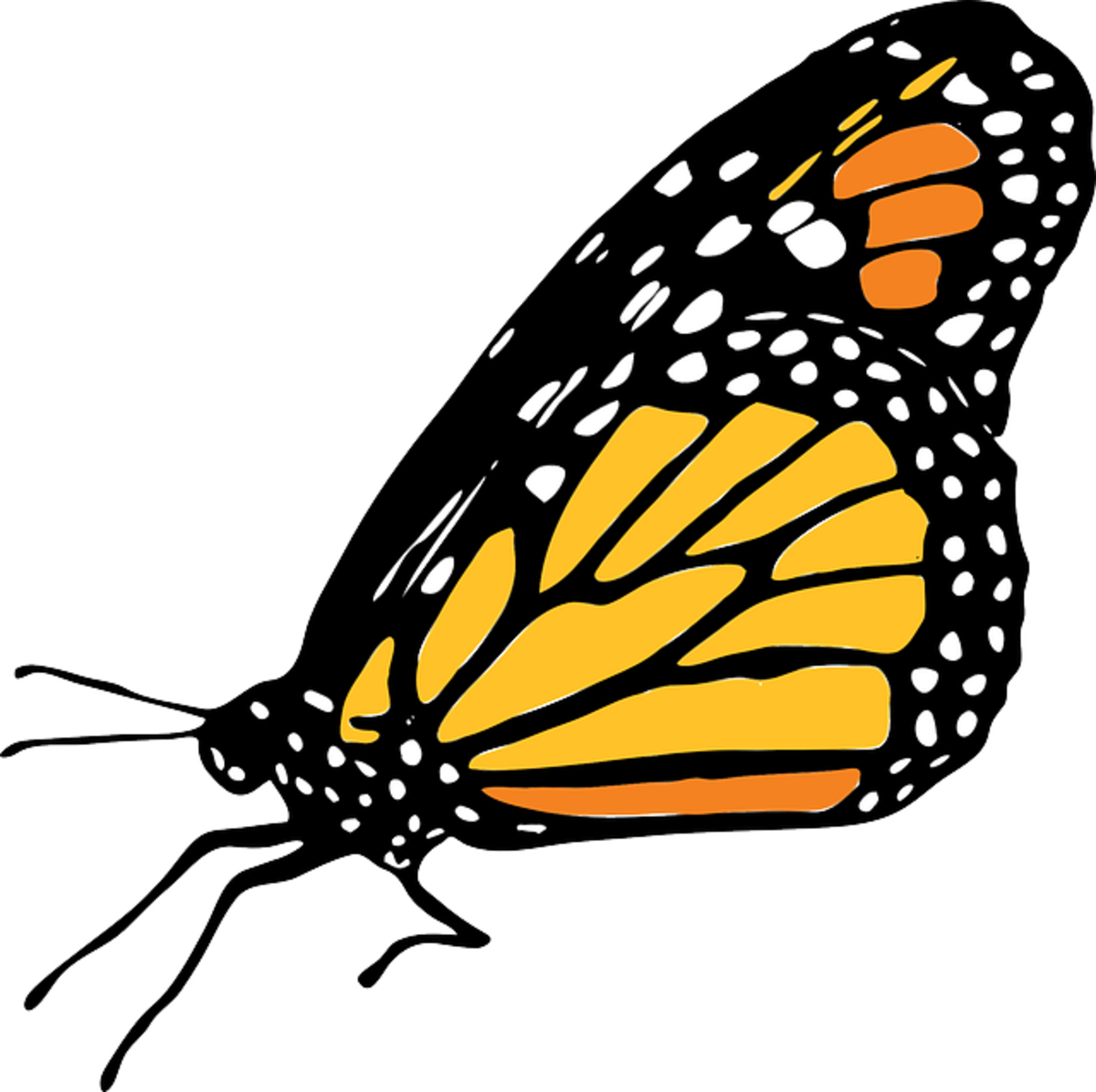 Big Monarch Butterfly