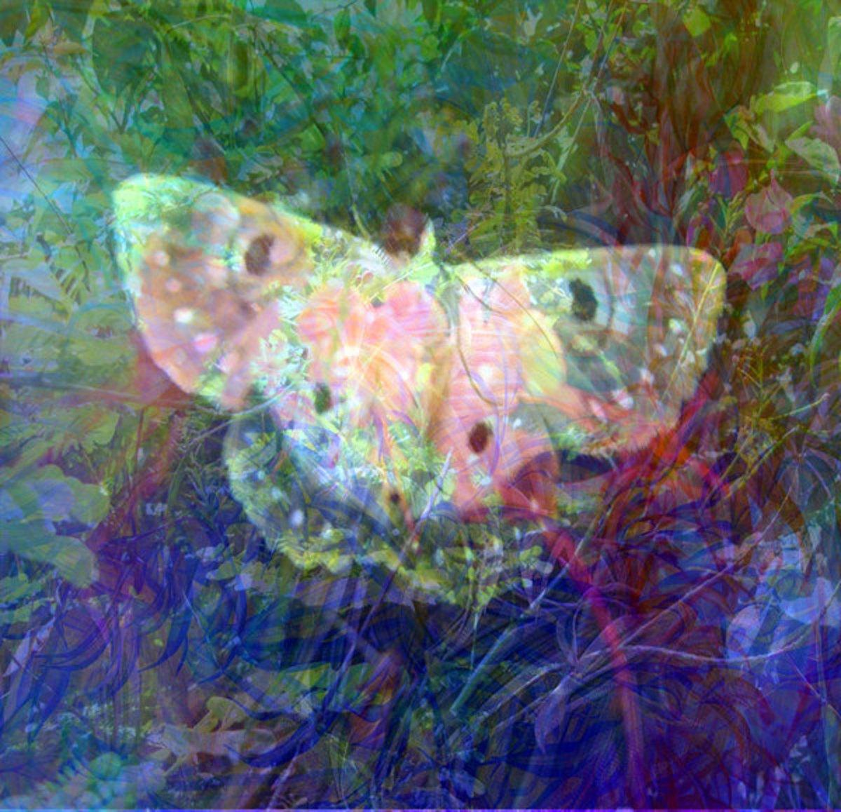 Butterfly Grunge Art