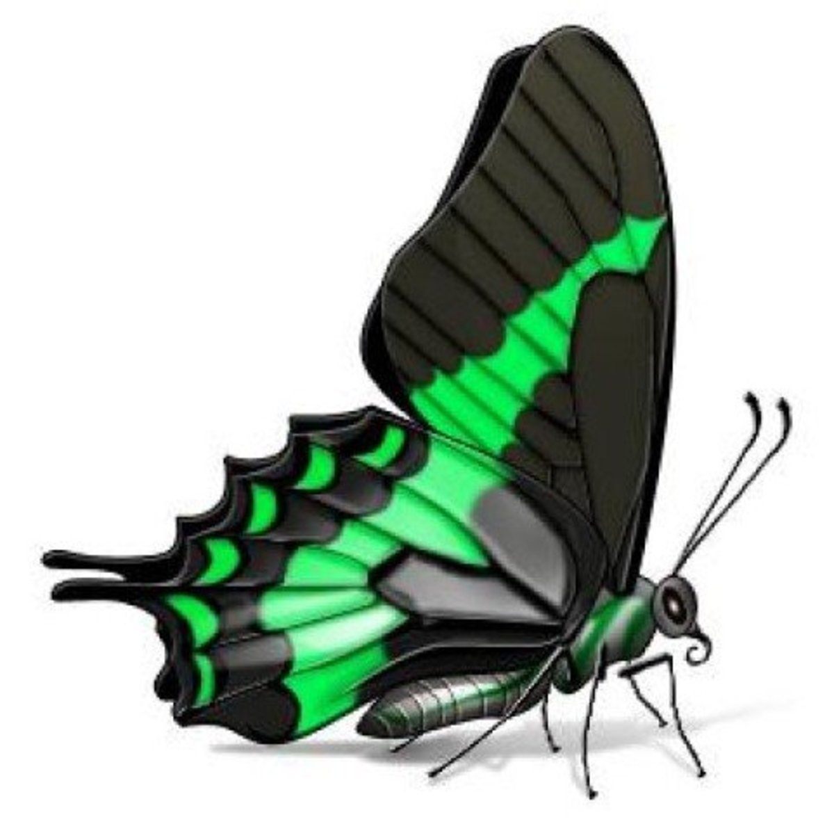 Green and Black Swallowtail Butterfly