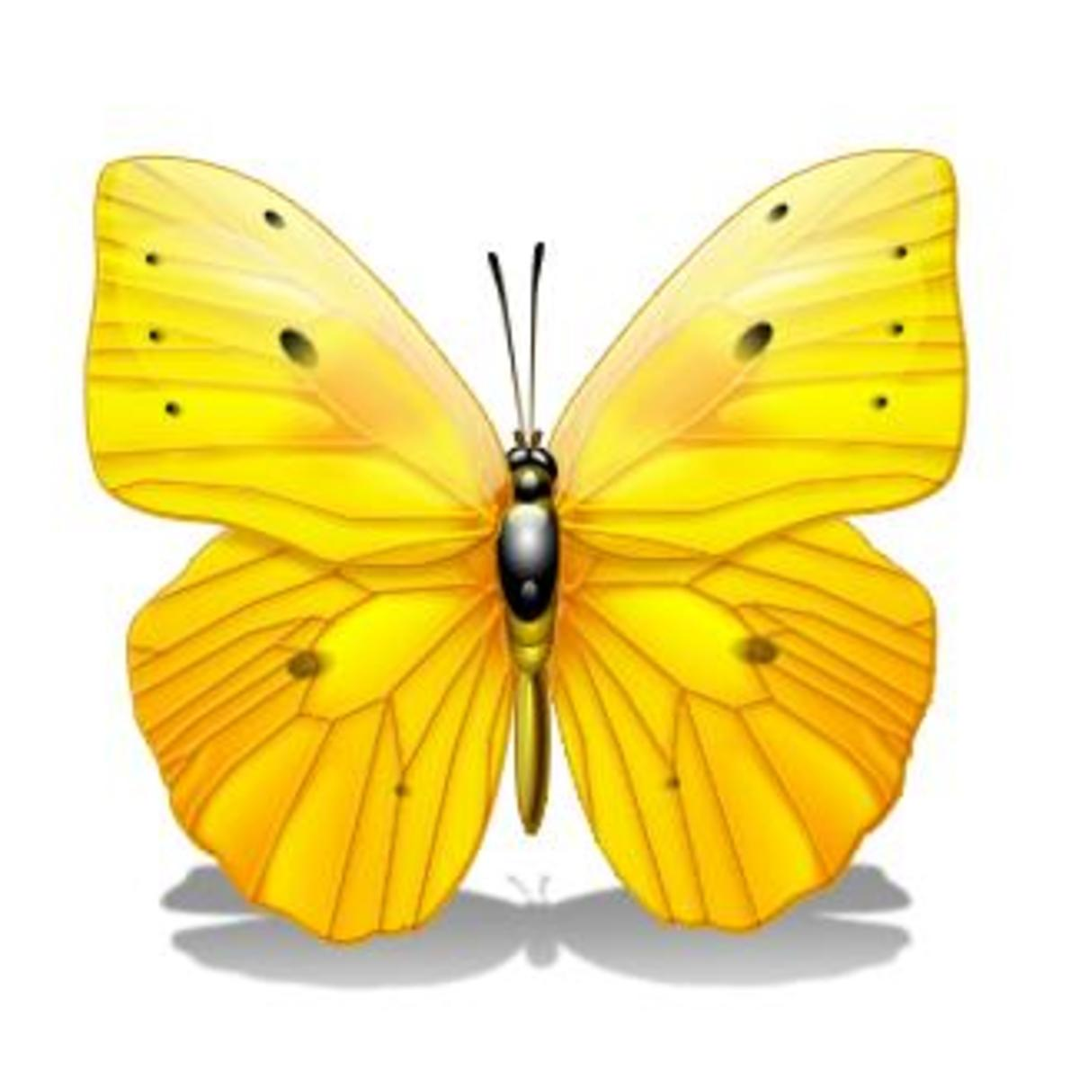 Yellow and Orange Butterfly with Wings Spread