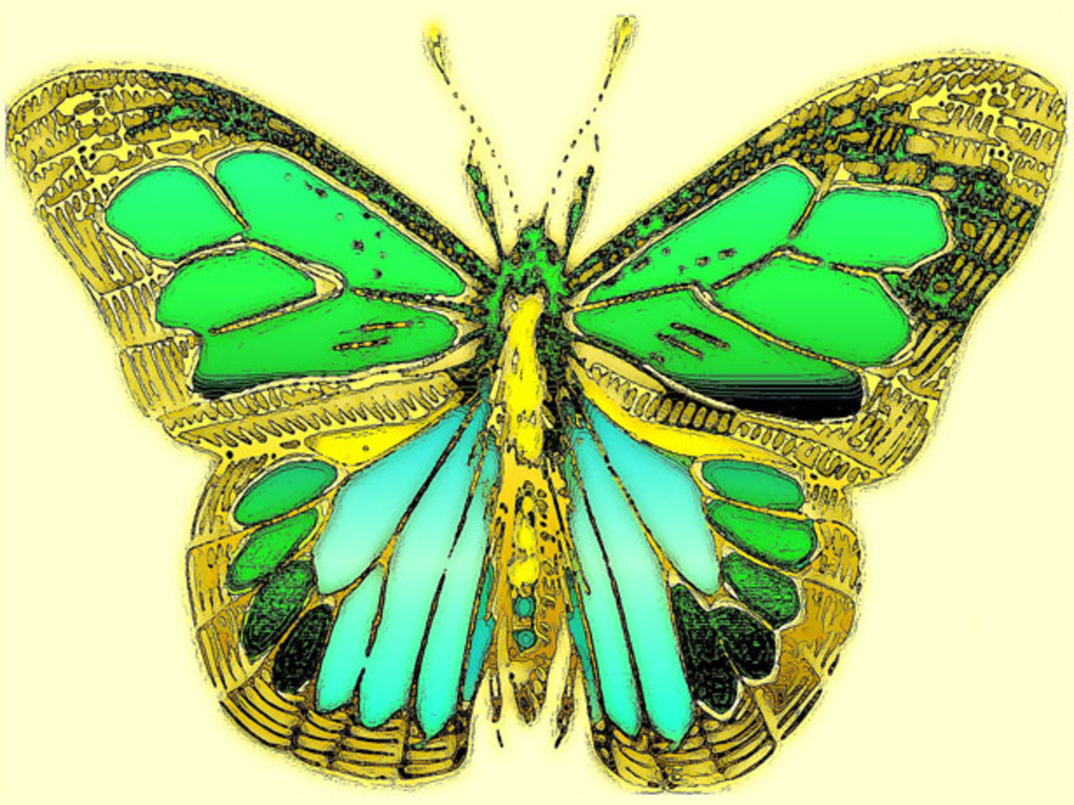 Iridescent Blue and Green Butterfly