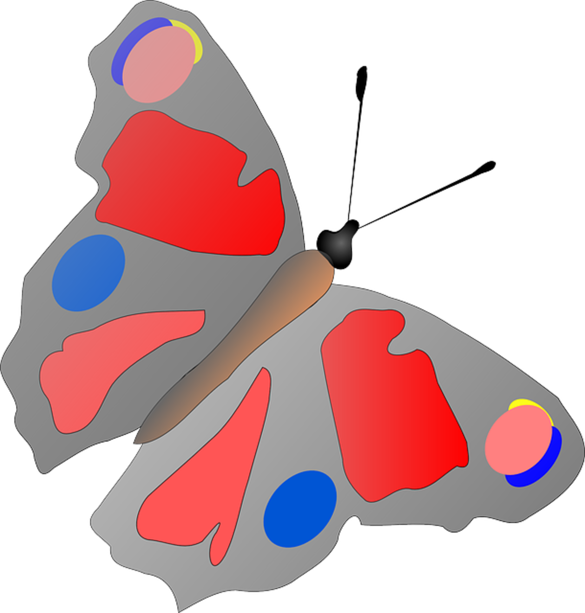 Painter Palette Butterfly