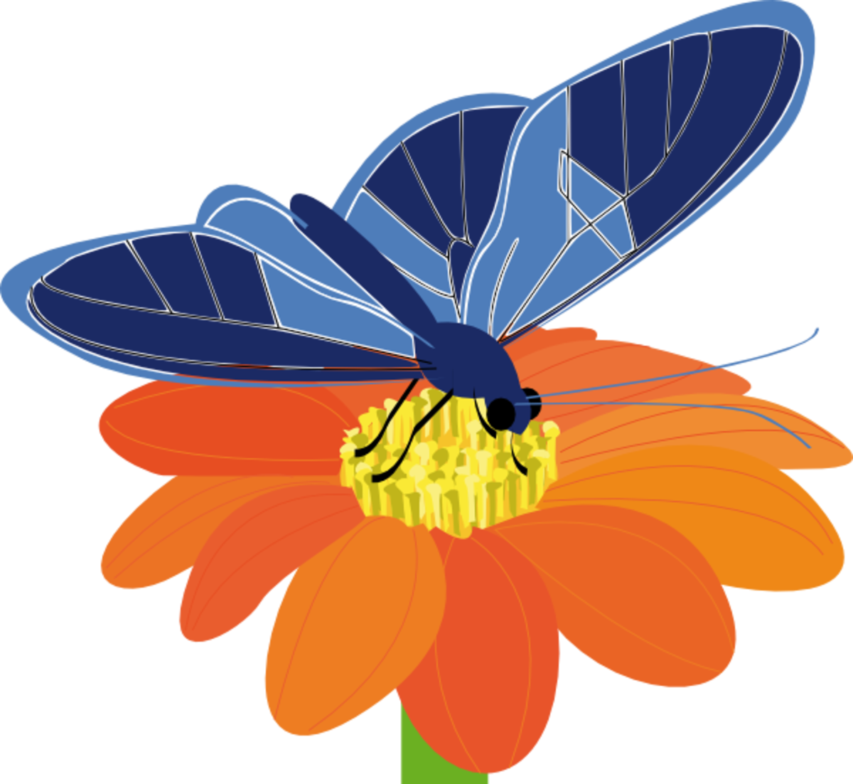 Blue Butterfly on Orange Flower