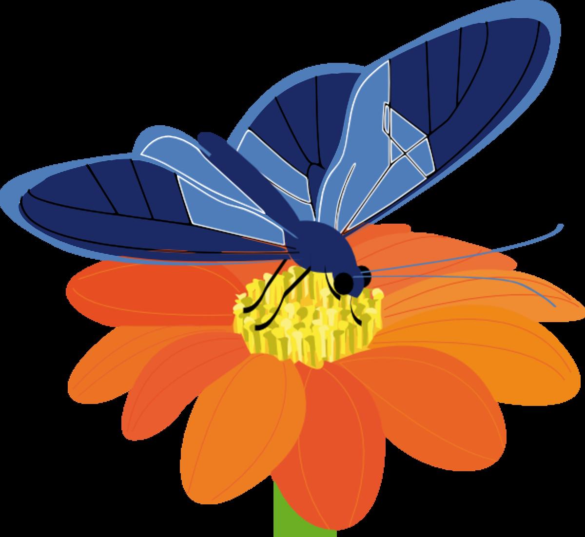 Blue Butterfly on Orange Flower