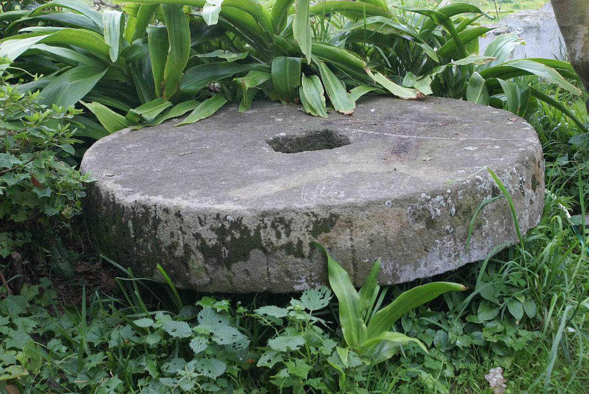 Millstone used to grinde archil lichen in Azores.