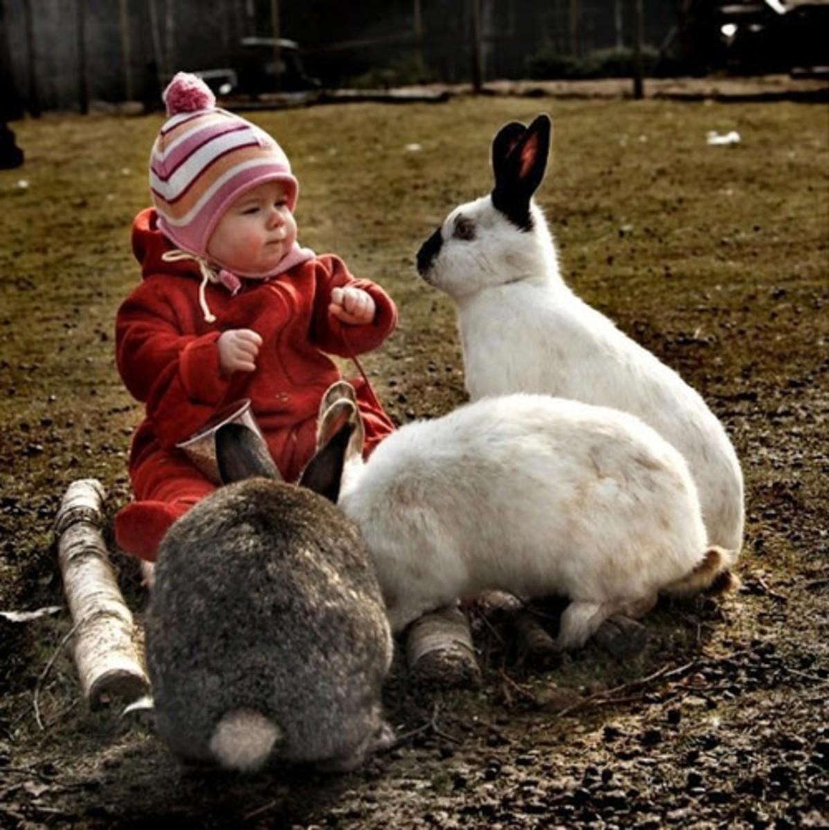 Cute baby and Himalayan Rabbit.