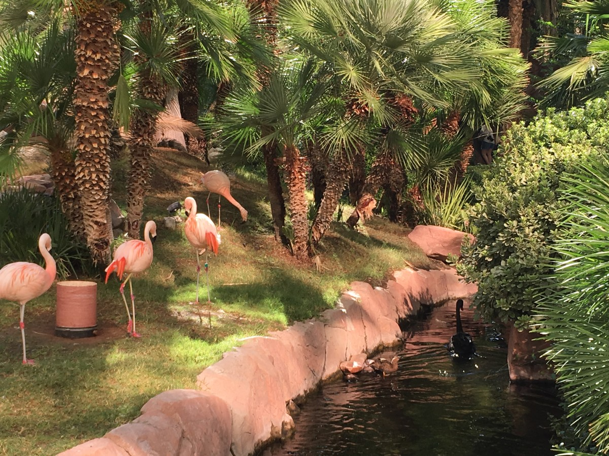 Flamingos you will meet while staying at the hotel.