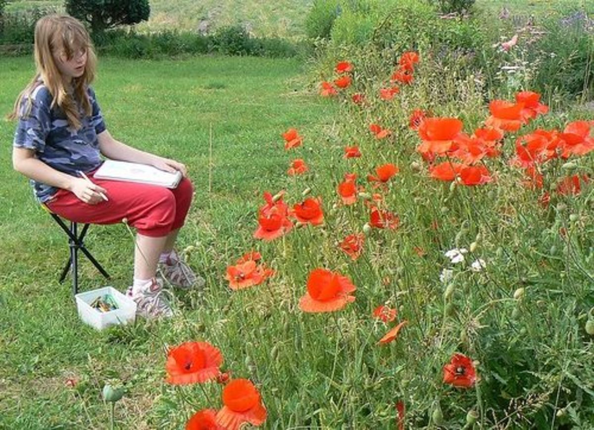 drawing poppies