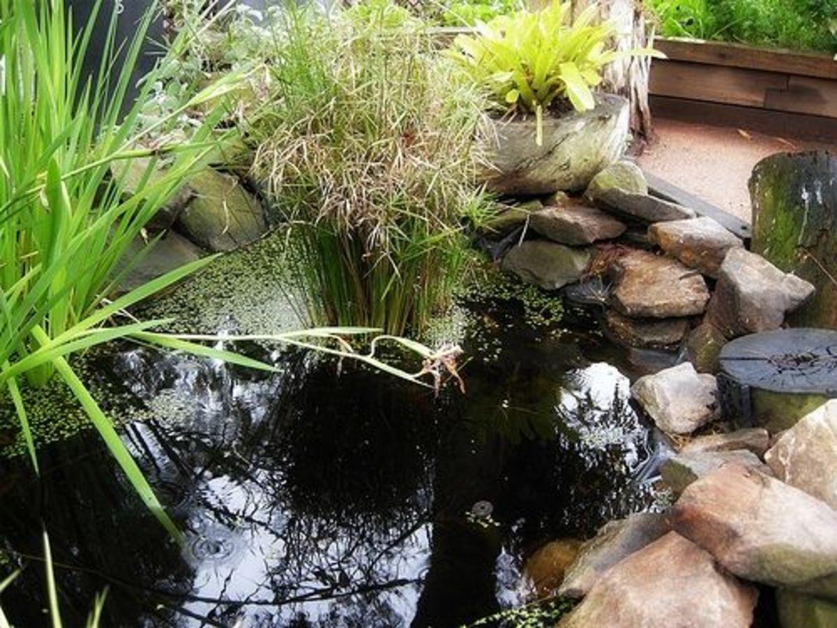 The Living Pond