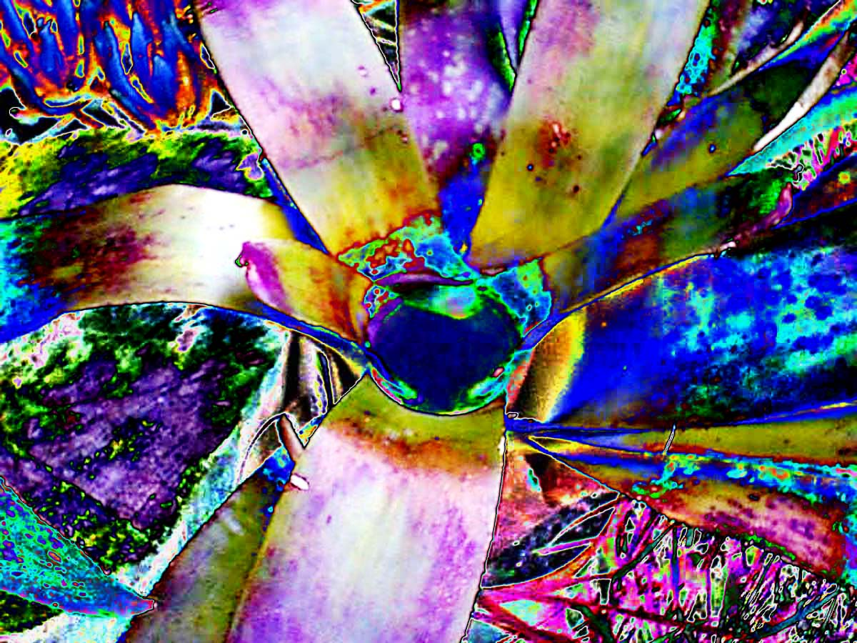 Vibrant Bromeliad and I have edited this one to bring up the brilliant colors even more