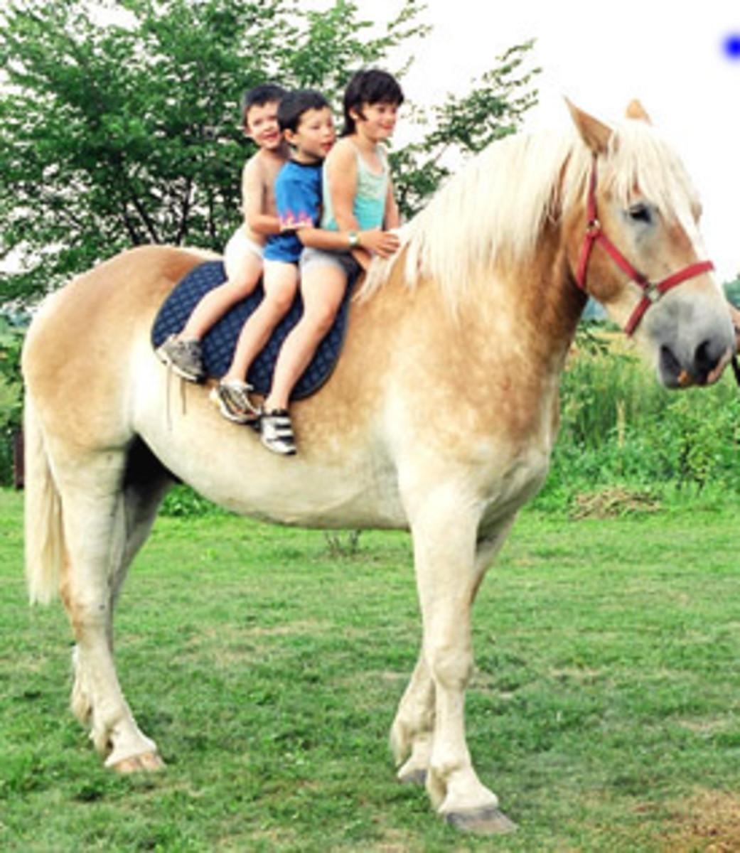 Thunder, Our Belgian Draft Horse