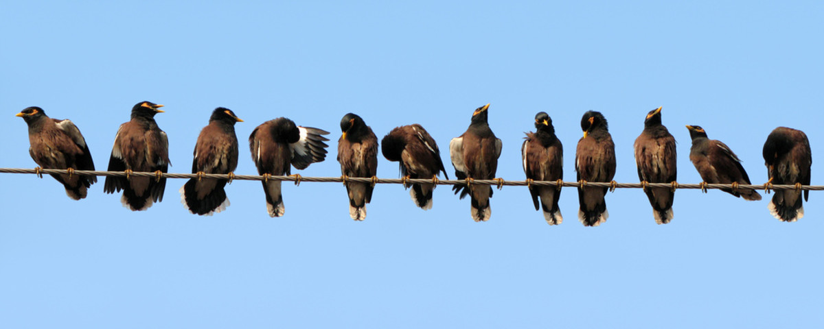 12 Birds on the Wire
