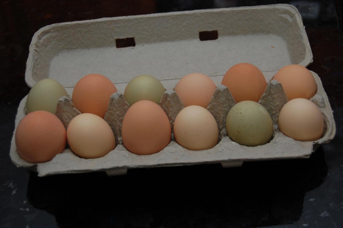 Eggs by the Dozen