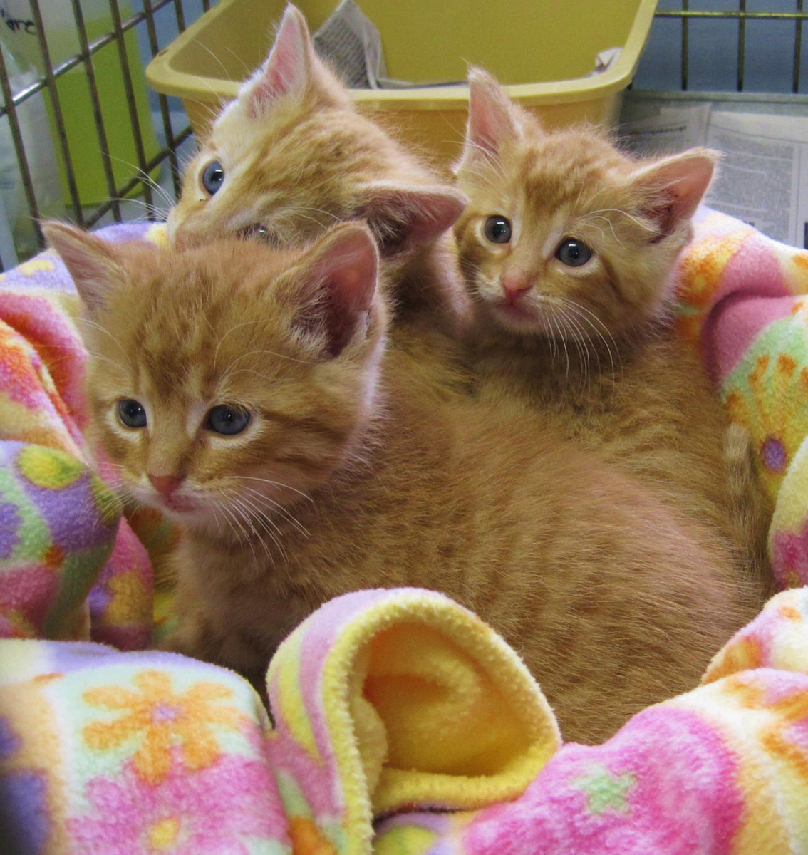 Three Little Kittens Count Their Mittens