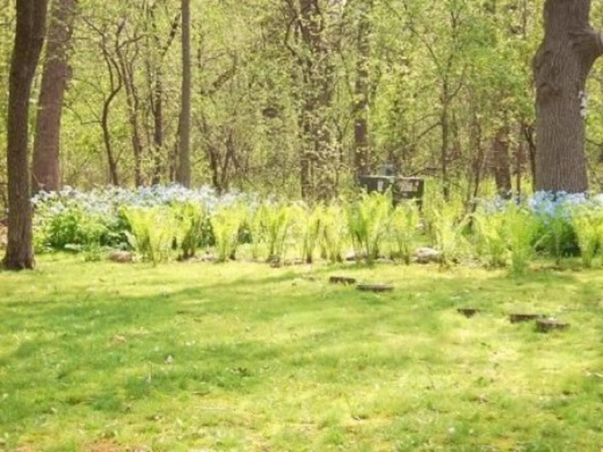 2011 Moss Garden, no gate