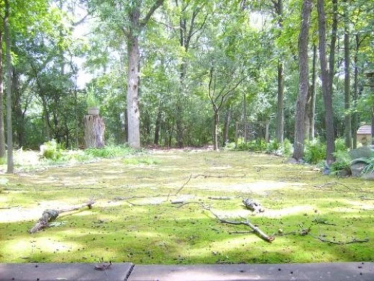 2010 Storm in Moss Garden