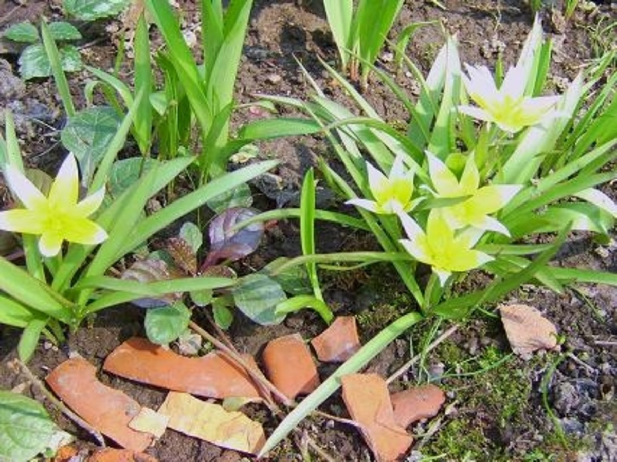 3/31/12 Yellow something ;-)