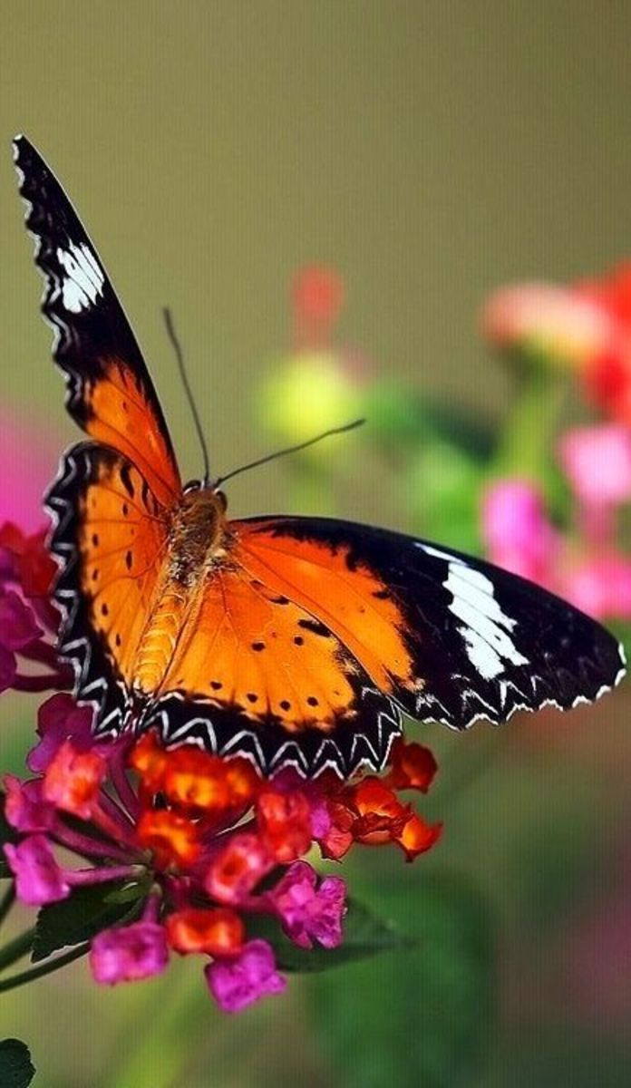 """If nothing ever changed, there'd be no butterflies.""  Unknown"