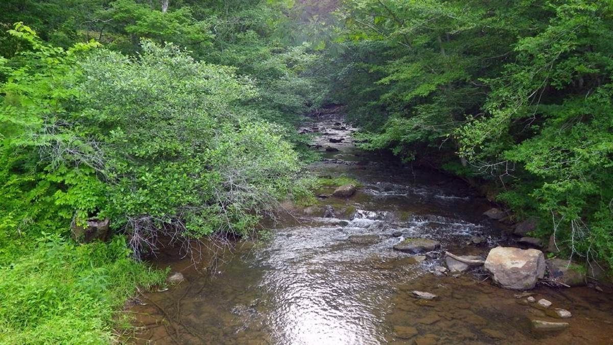 One of the many streams that run throughout Tannehill State Park