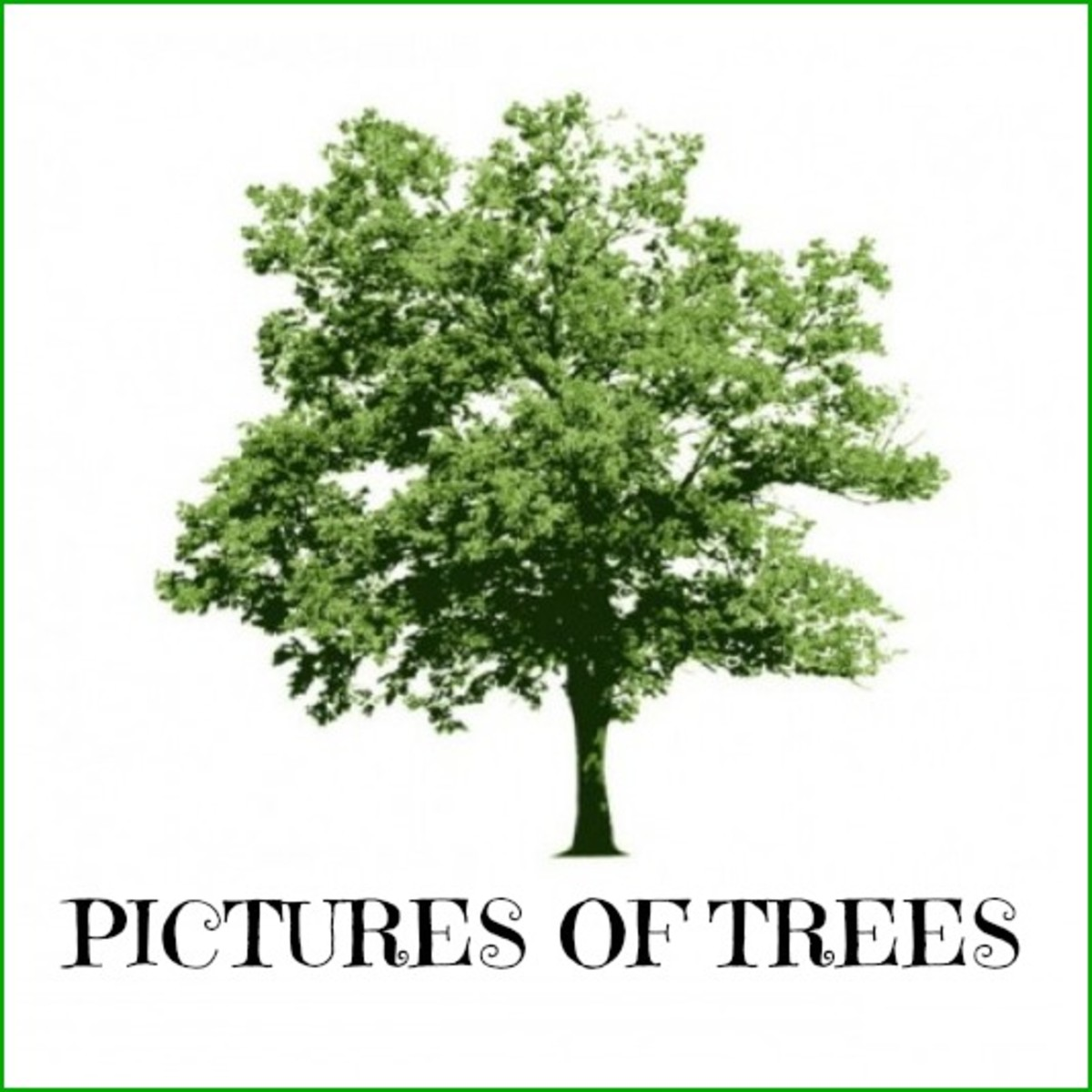 200 TREE PICTURES | Best Free Tree Photos with Tree Names