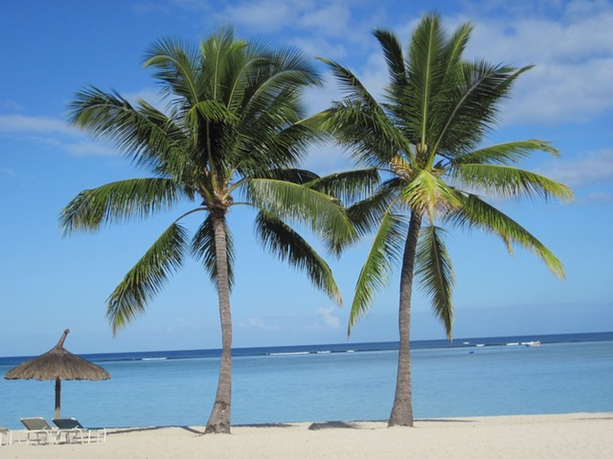 Coconut Palm Trees on an Island Beach