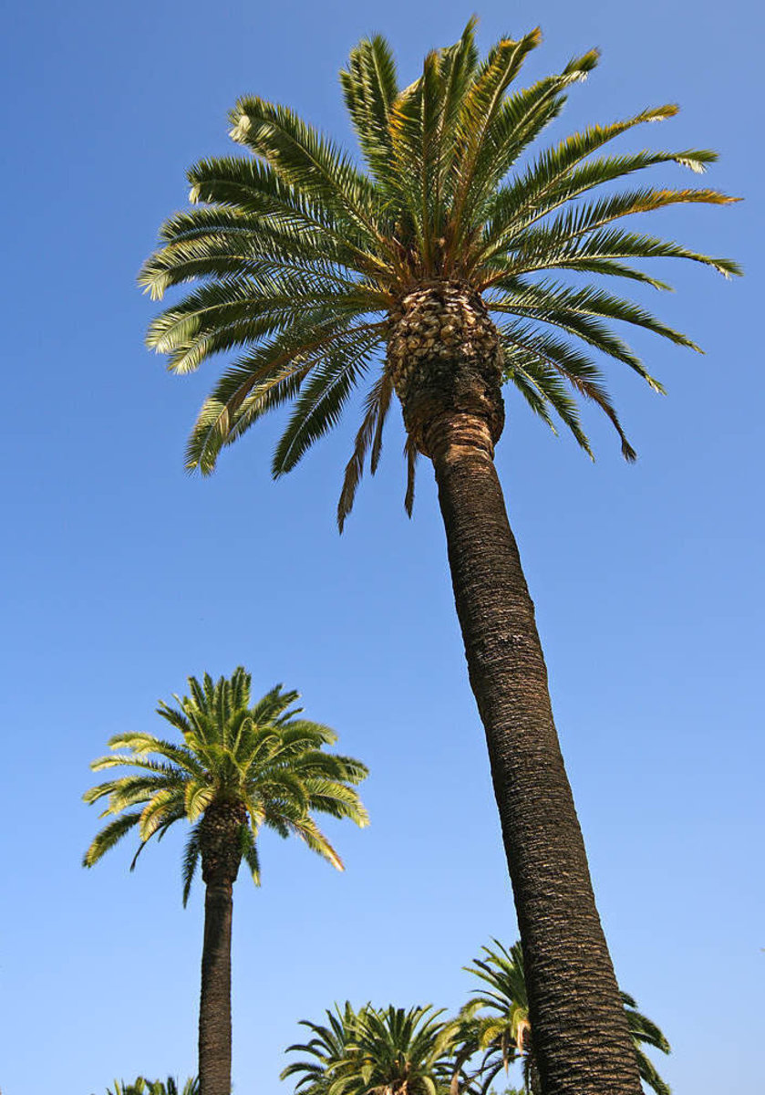 Palm Tree Images
