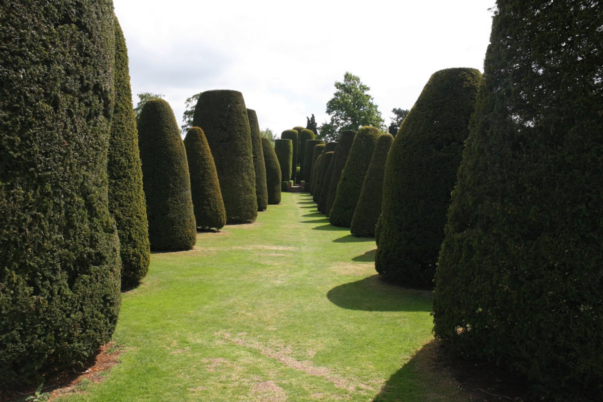 Garden of Yew Trees