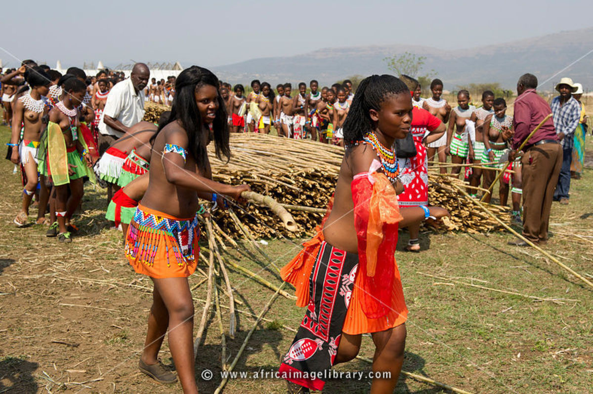 Swazi Girls Collecting The Reeds for the Festivities